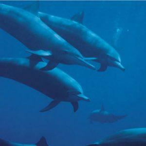 Dolfin Empowerment - Empowerment des Dauphins