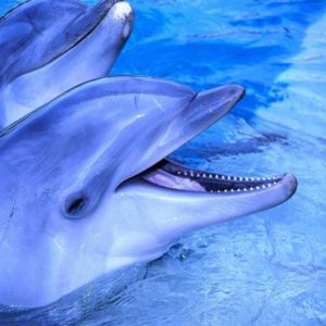 Dolphins of Atlantis - Dauphins de l'Atlantide