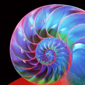 Nautilus spiral chamber energy - Chambre D'Energie du Nautilus Spiralé