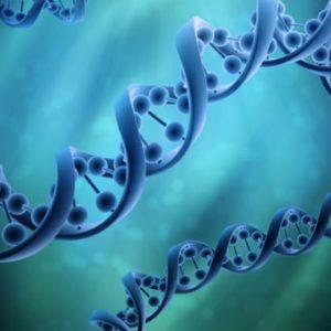 Soul Lineage Genetic Integration Practitionner - Intégration génétique de la Lignée de l'Âme niveau Praticien